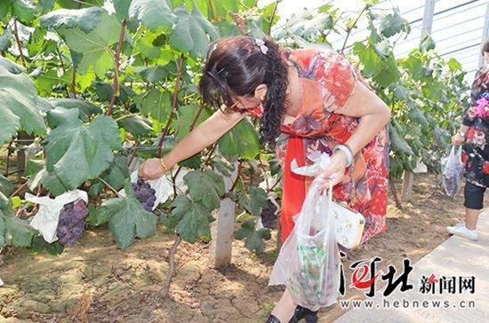 邯郸市肥乡区葡萄采摘旅游文化节开幕(图)