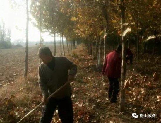 邯山区认真搞好主干道两侧林带整治工作