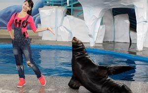 海狮大秀婀娜身段 和我们摆一样的POSE