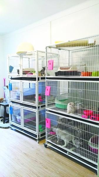 武汉一居民楼开宠物寄养中心 居民希望迁走猫咪