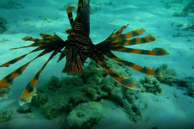 壁纸 动物 海底 海底世界 海洋馆 水族馆 鱼 鱼类 640_426