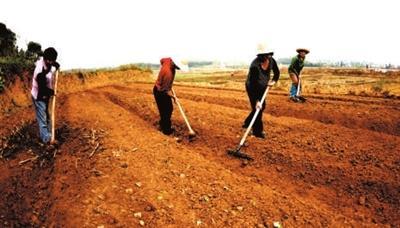 咸安区马桥镇曾铺村民在翻耕土地 准备油菜直