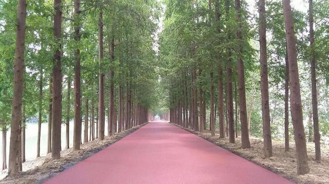 端午节:潜江兴隆河绿道项目建设又有新进展