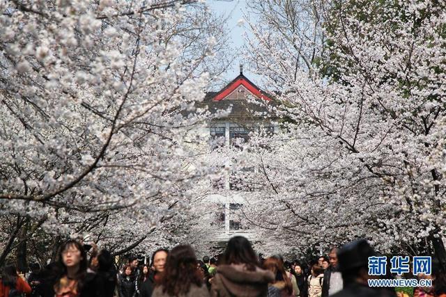 组图:春回大地 看各地如画美景