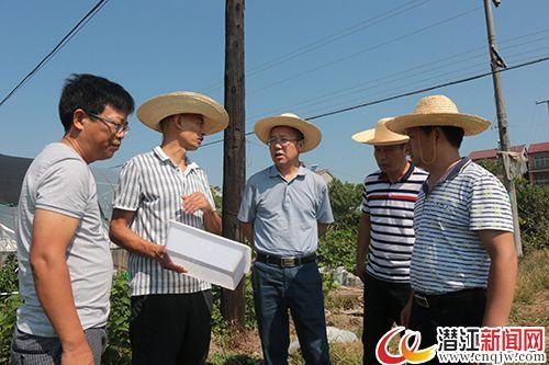高温热害天气导致潜江市28.8万亩农作物受灾