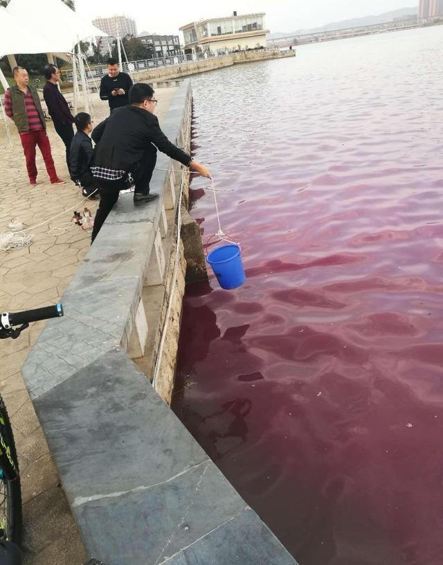 大冶尹家湖部分湖水莫名变红色 环保人员抽样检测