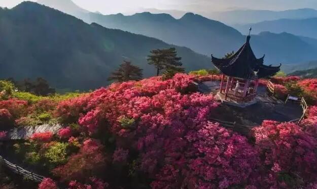 龟为神,花为魂,茶为寿!用全新的视角看龟峰山!