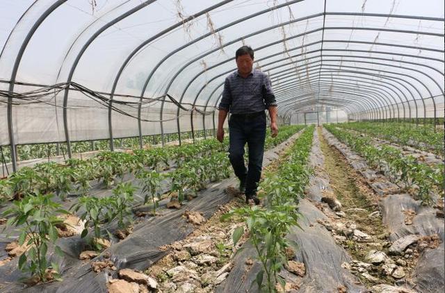 襄州区移民局积极解决移民种菜卖菜难问题
