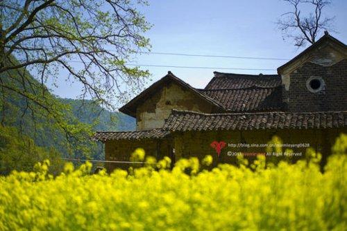 绿树,黄花,老房子