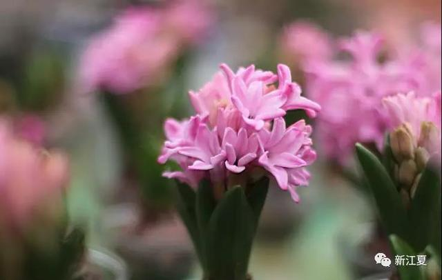 300个品种100多万盆花卉 最大规模迎春花市等你来