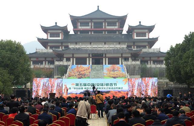 第五届中国(安陆)银杏节启幕 当地新增两项荣誉