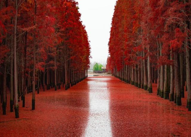 """一片""""绿""""的仙桃梦里水乡,这次要""""红""""了"""