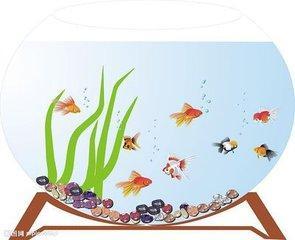 如何摆放鱼缸 家庭中鱼缸摆放风水禁忌
