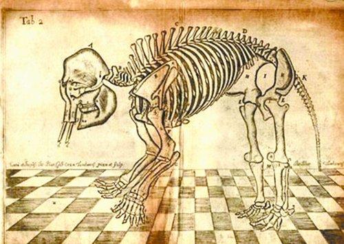 形成了堪比其他五趾的支柱状骨骼结构.