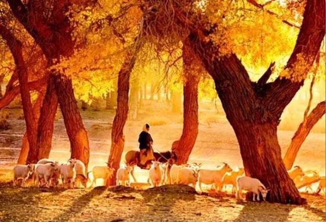9月底额济纳将进入最美的季节 一年只有21天!