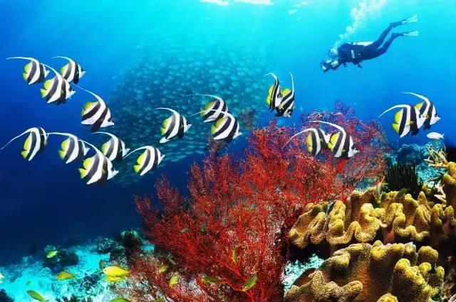 6美金海鲜餐200美金考潜水证 这里比去东南亚还划算