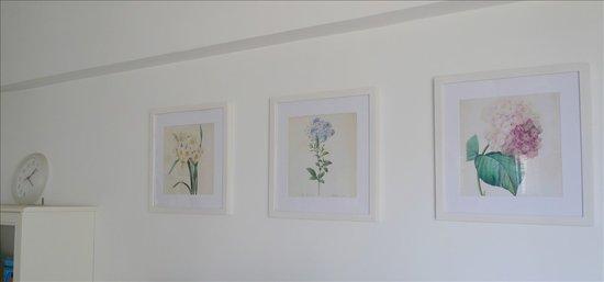 电视墙上的手绘植物图谱,是我自己买相框diy的呦