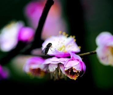 如何剪梅花的步骤图解