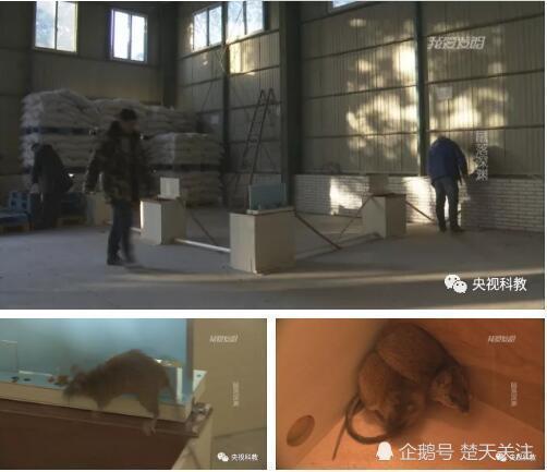 李翔的捕鼠设备在国家粮食储备库里抓到4只老鼠