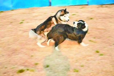 宠物狗打架引冲突 两主人理论无果大打出手