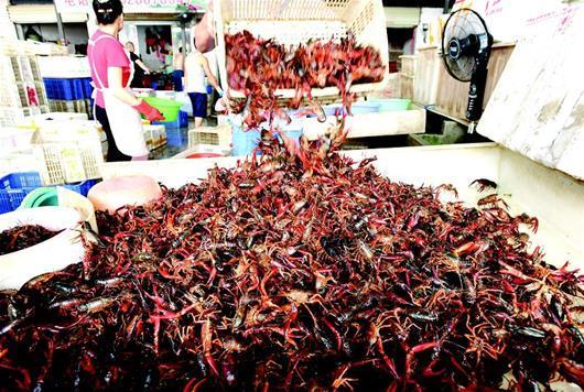 图为:待分拣的小龙虾