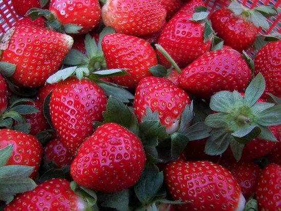 摘草莓了!武汉三镇踏春草莓园全攻略