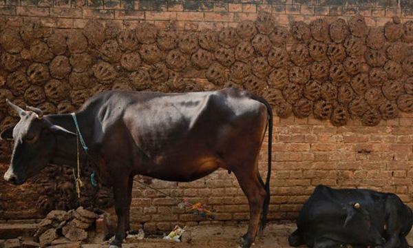 印度节日布贴画