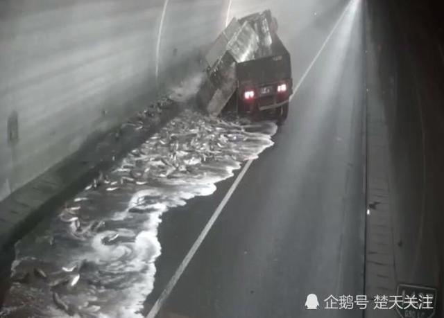 货车司机打盹撞车 价值10万鲜鱼撒落隧道中