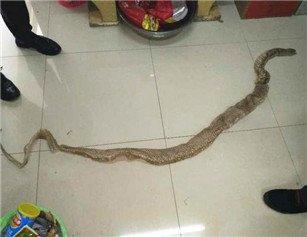 惊心!武汉一船内现两米长蟒蛇蛇蜕