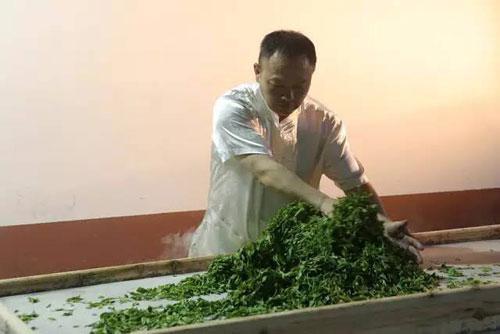 喝茶是种品位还是种文化 你真的懂茶么?