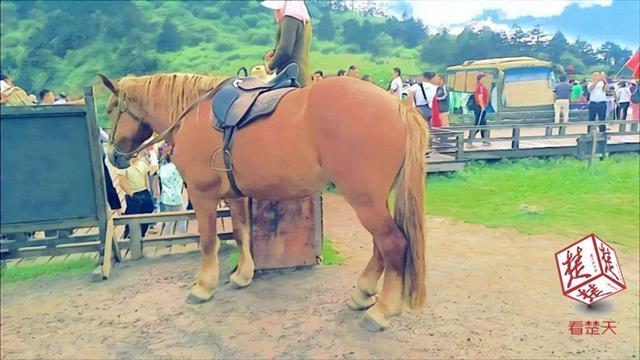 随州女子重金买马被卡收费站 1个小时后马却倒毙