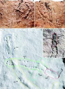 """宜昌发现地球上最古老""""脚印"""" 距今5.5亿年"""