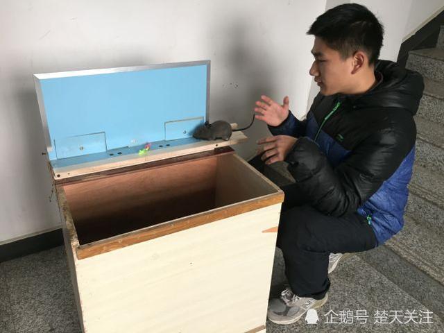 李翔讲解捕鼠设备原理