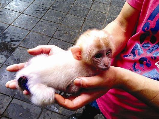 尸体解泡�_宜昌疑似白化猕猴未满月夭折 上吐下泻医治无效