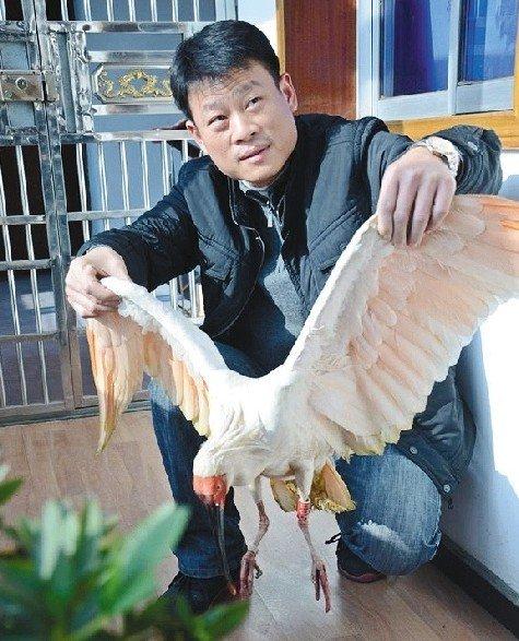 安陆村民打柴捡只怪鸟 原是濒危珍稀鸟类朱鹮