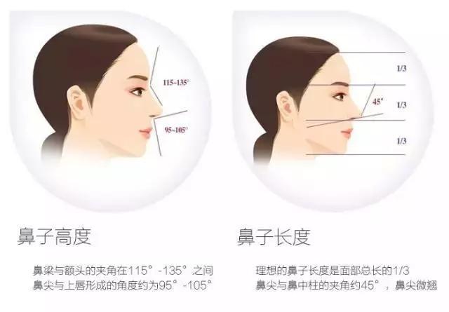 什么样的鼻子更最好看?答案在这里