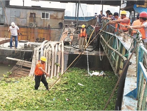 汉江江面又成绿茵场 每分钟漂1吨水白菜(图)