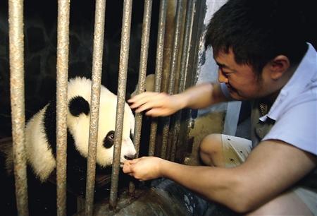 """""""慈父奶爸""""动物园里创造物种延续奇迹"""