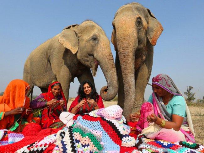 好喜感 印度的老弱大象竟然有毛衣穿