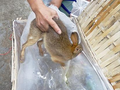 24只野生动物即将被运往广东 被民警截留(图)