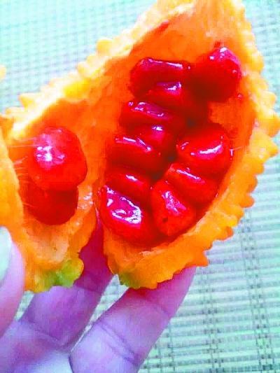 男子怪姐姐误将苦瓜当水果 原是江浙癞葡萄