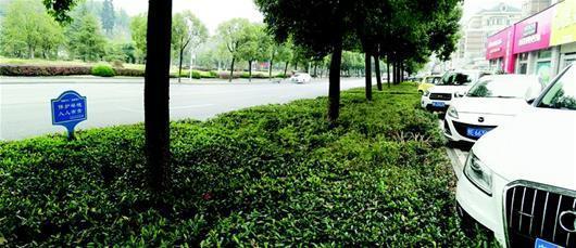 车辆乱停乱放绿化带受伤 园林局表示将采取措施