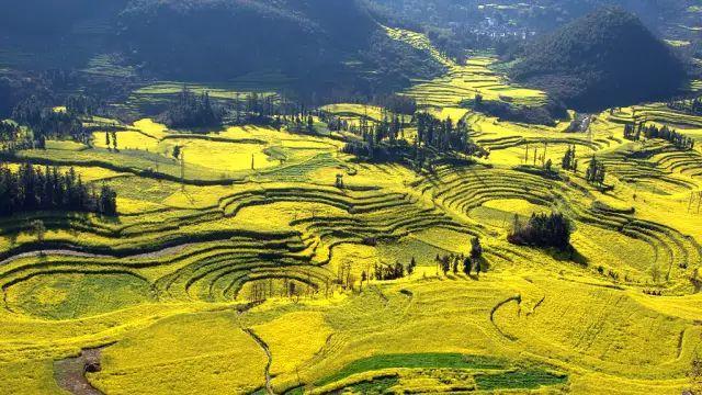 深藏云南的千年小城 迎来了它最美的观赏季!