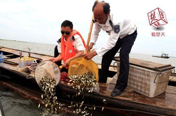 洪湖史上最大规模增殖放流 投放3900万尾鱼苗