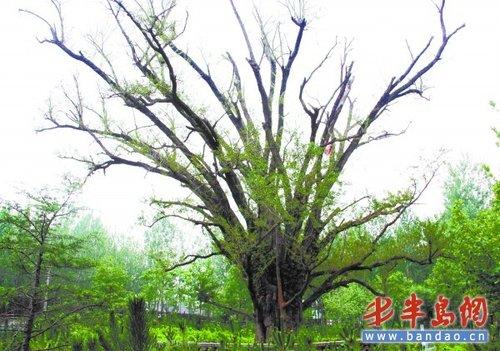 树木缺水枯萎图片卡通