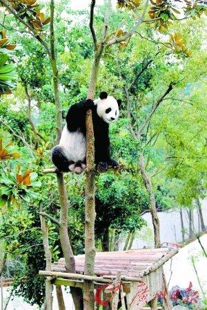 让很多动物比赛爬树