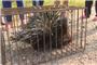 稀奇!荆州一村民家门口出现稀有动物 你见过吗?