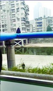 女生爬上7米高管道跳下 民警徒手接人被砸断腿