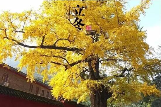 跟着24节气去宜昌 完成一年的旅行清单(图)