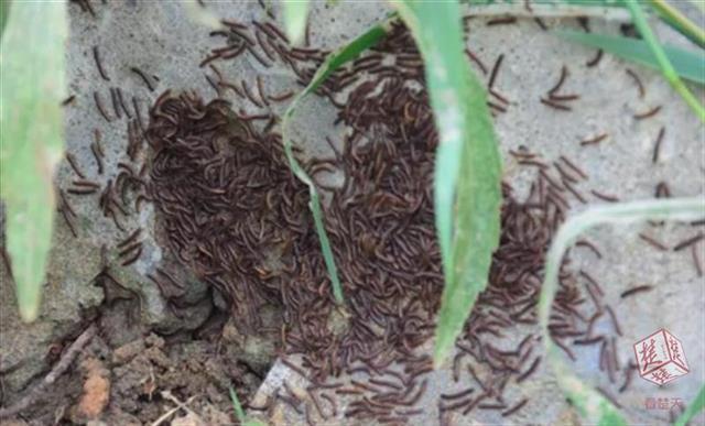 荆州一地出现大量千足虫 专家:与地震前兆无关